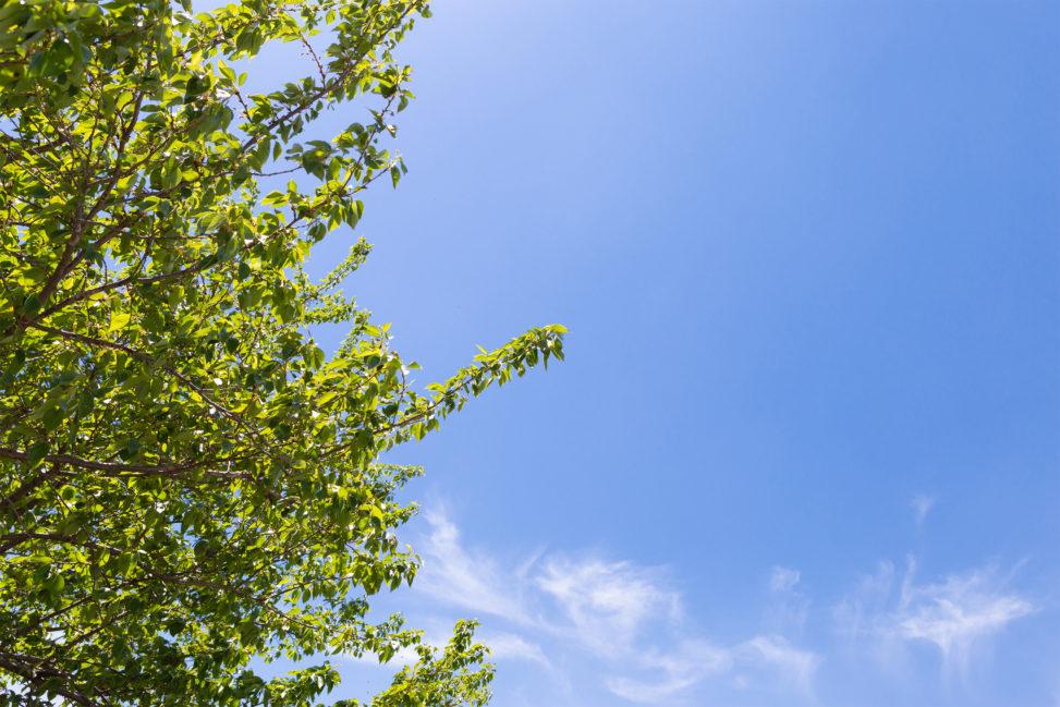 新緑と青空の写真素材