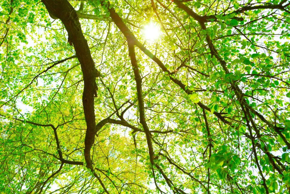 新緑と木漏れ日の写真素材