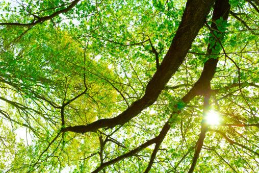 新緑と木漏れ日02の写真素材