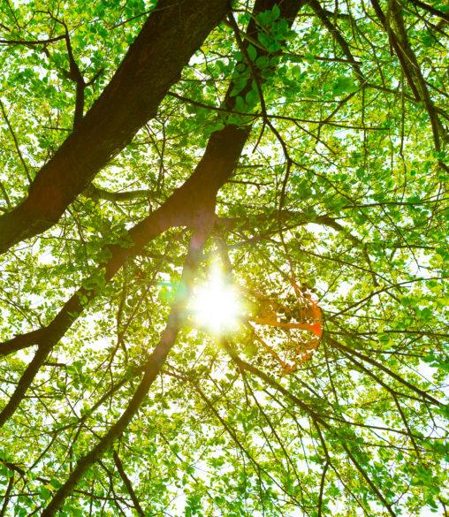 新緑と木漏れ日03の写真素材