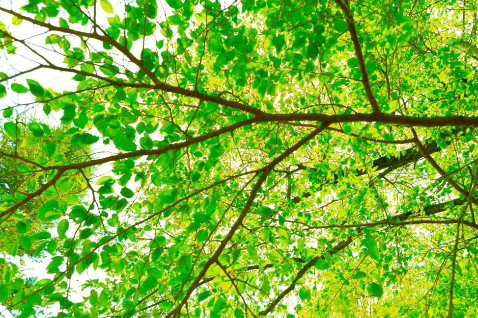 新緑の森林の木漏れ日の写真素材