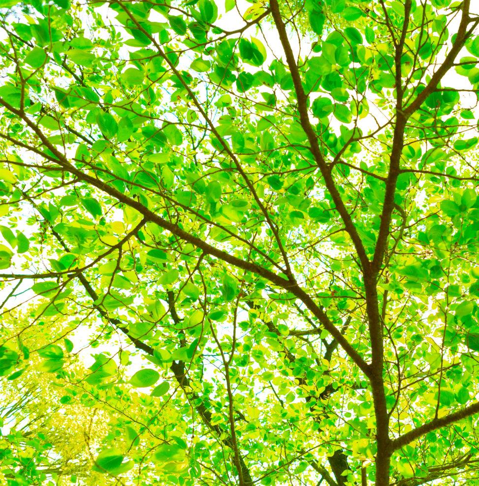 新緑の森林の木漏れ日02の写真素材