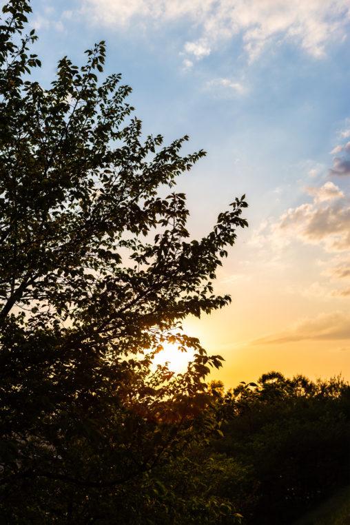 木の陰に沈む夕日(夕焼け)の写真素材