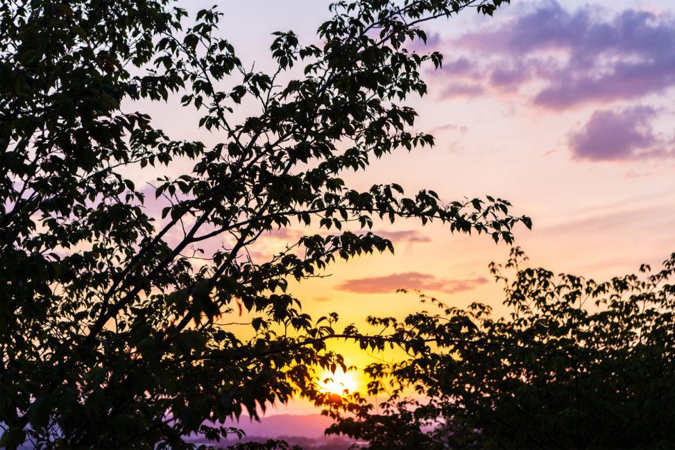 木の陰に沈む夕日(夕焼け)02の写真素材