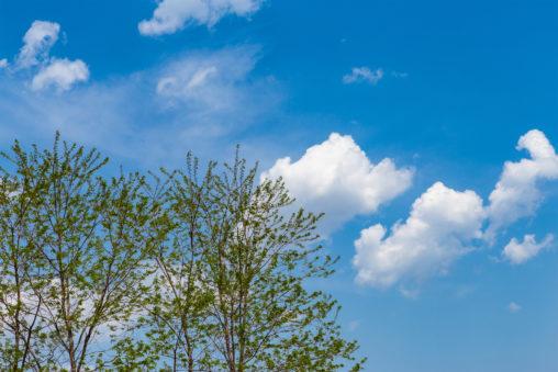 緑の植物と青空の写真素材