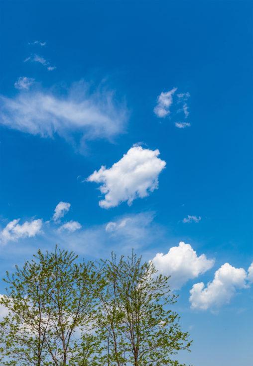 緑の植物と青空02の写真素材