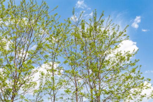 緑の植物と青空03の写真素材