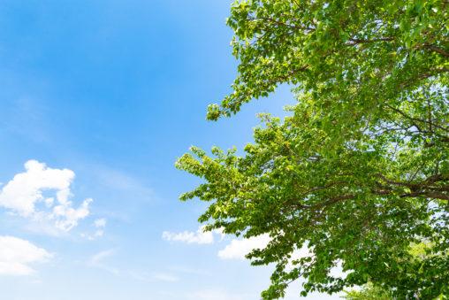 5月の新緑と青空の写真素材
