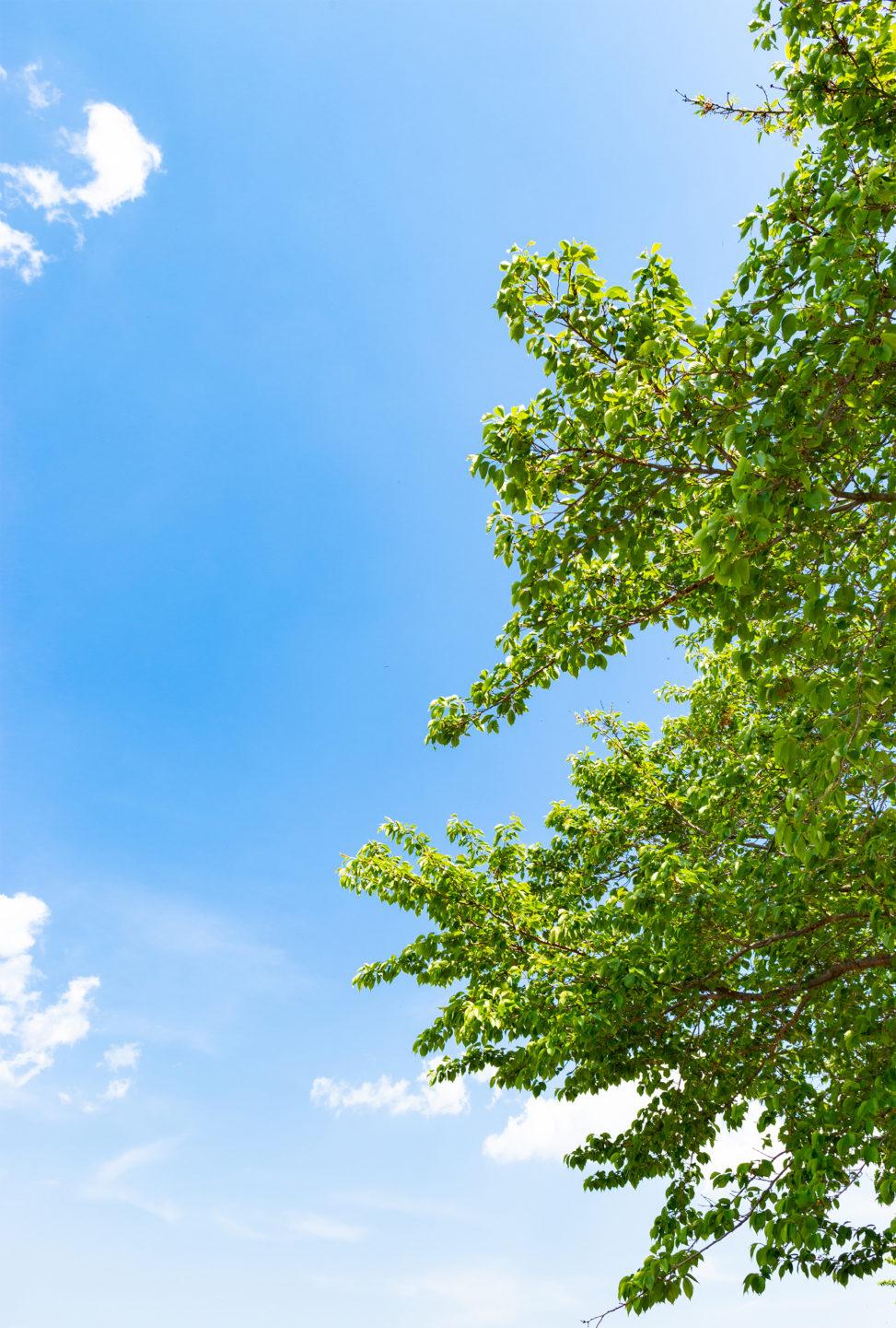 5月の新緑と青空02の写真素材
