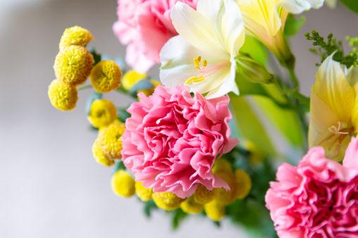 ピンク色のカーネーションの写真素材