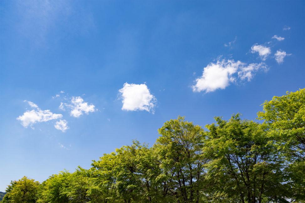 5月の新緑と青空03の写真素材