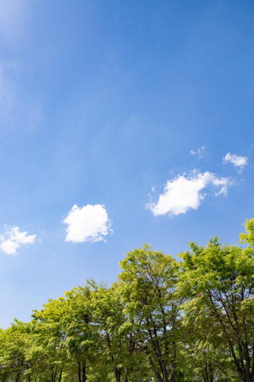 5月の新緑と青空04の写真素材