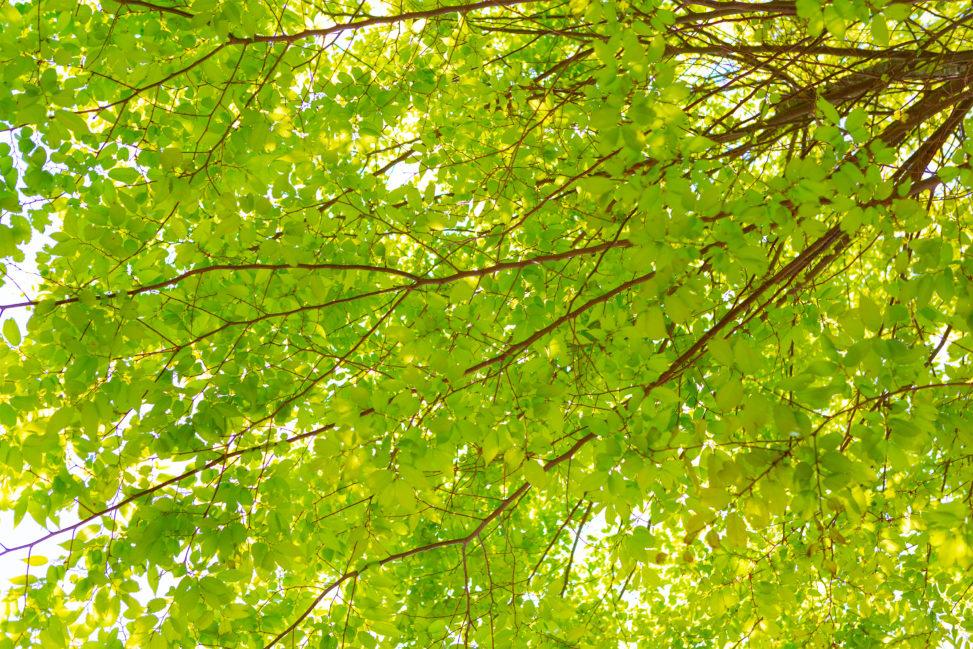 新緑の森林の木漏れ日03の写真素材