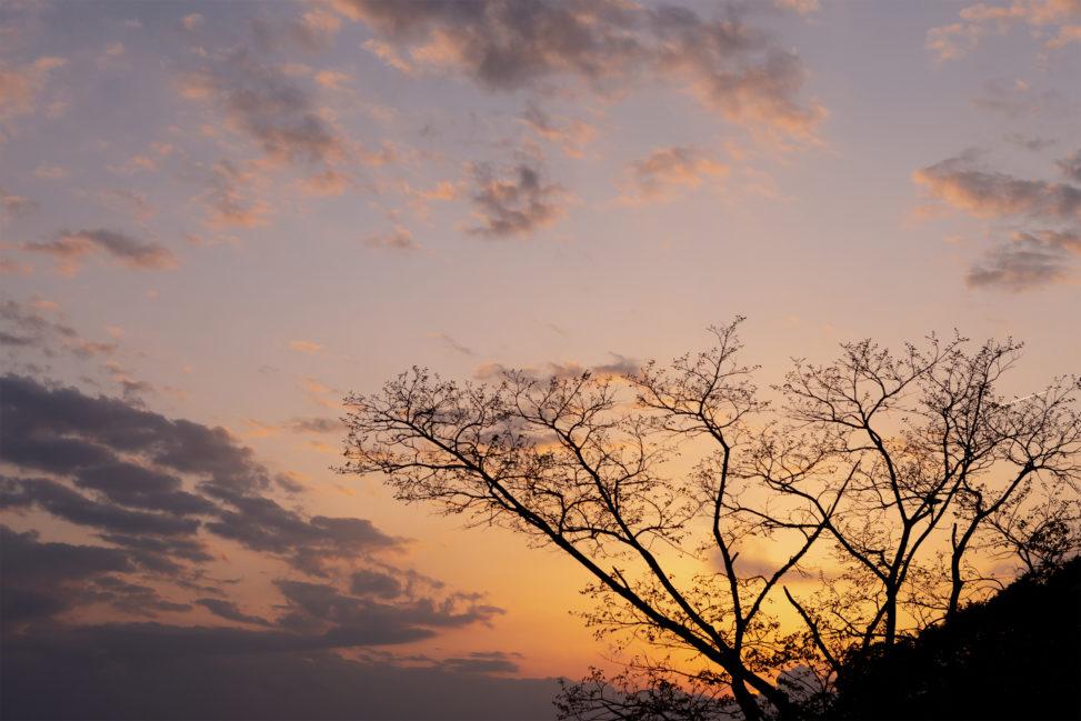 木のシルエットと夕暮れの写真素材