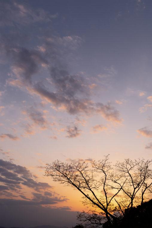 木のシルエットと夕暮れ02の写真素材