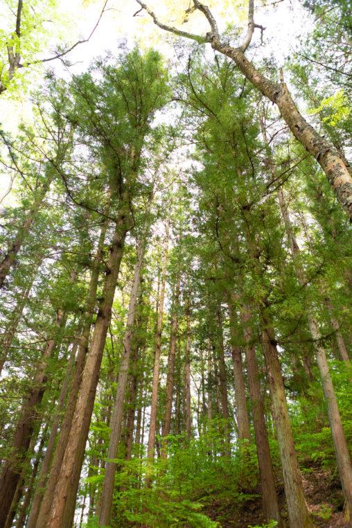 樹木・林の写真素材