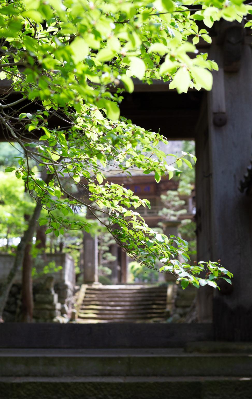 お寺の山門と新緑の写真素材