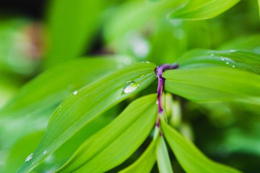 雫と葉っぱ02の写真素材