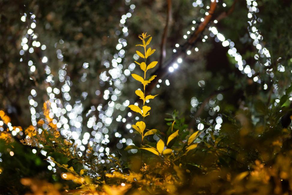 植物とイルミネーションの写真素材
