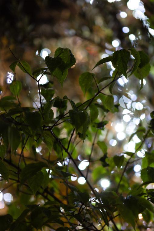 植物とイルミネーション02の写真素材