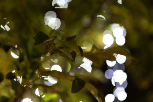 植物とイルミネーション03の写真素材