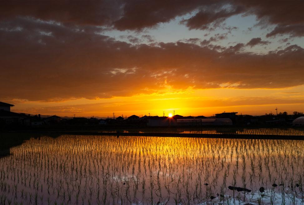 水田に反射する夕日(夕焼け)04の写真素材