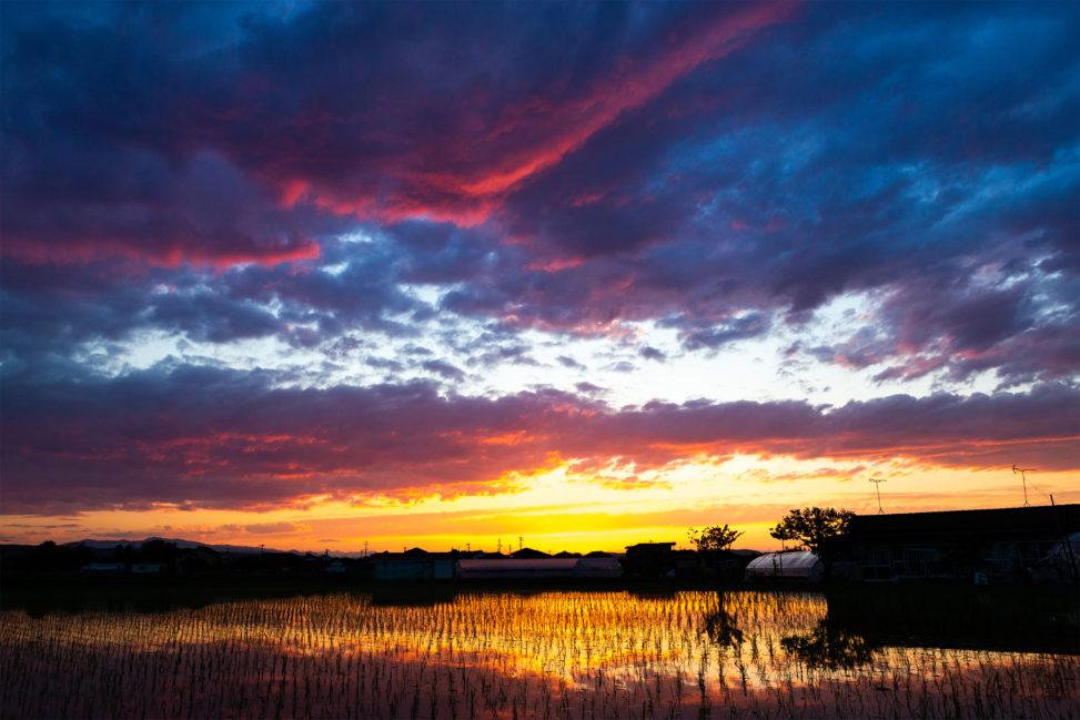 水田に反射する夕焼けと茜雲の写真素材