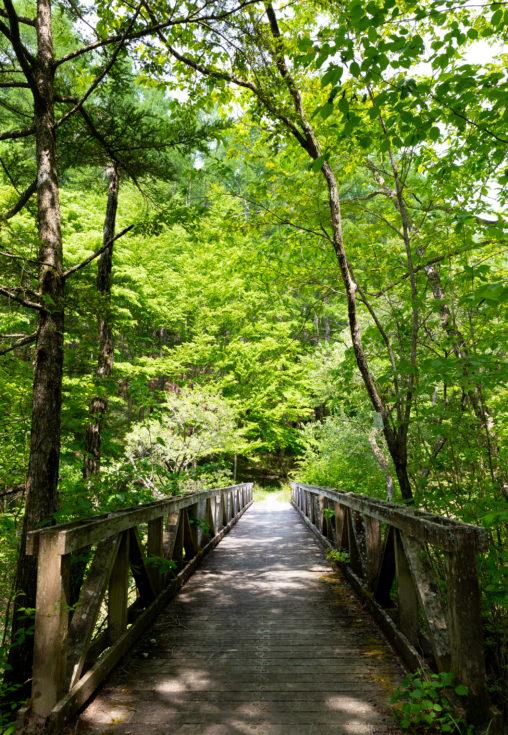 森林と木の橋の写真素材
