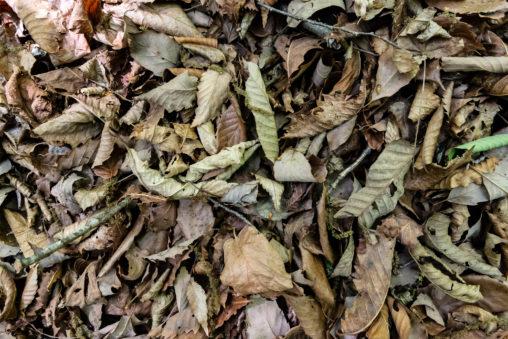 枯葉・落ち葉のテクスチャーの写真素材