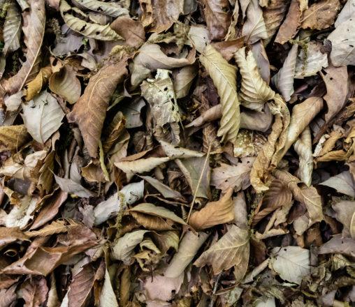 枯葉・落ち葉のテクスチャー02の写真素材