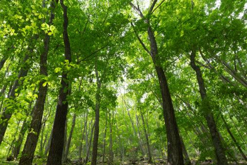 森林・樹木の写真素材