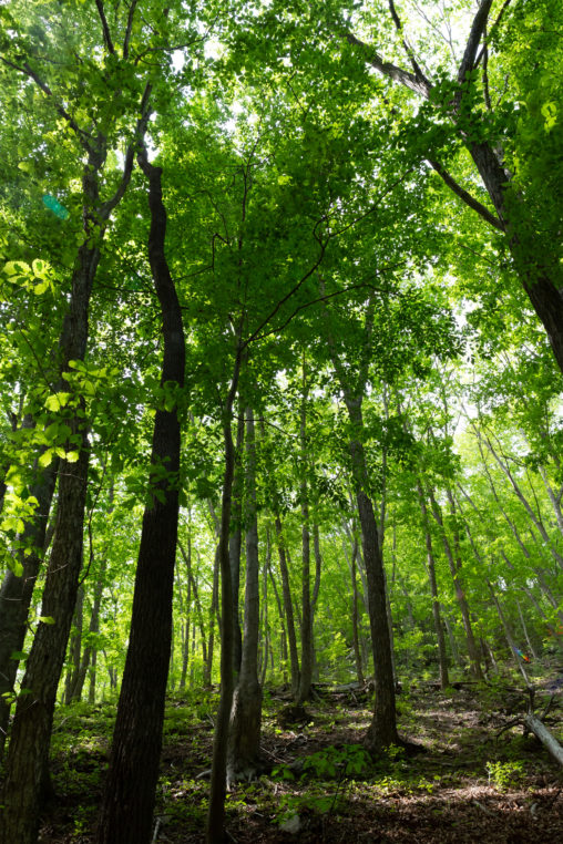 森林・樹木02の写真素材
