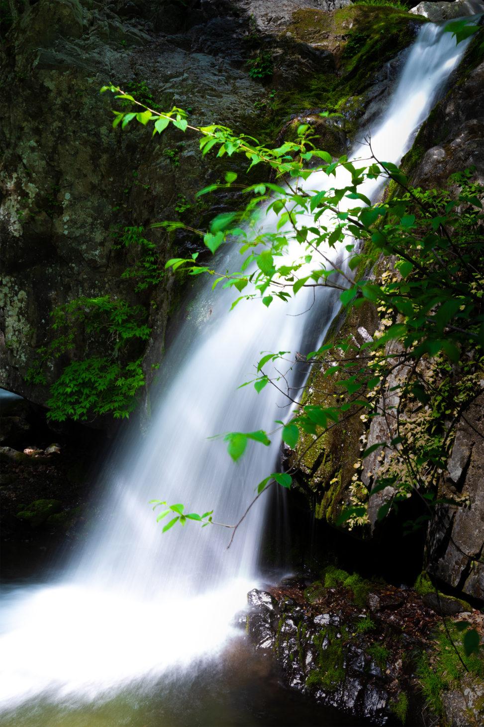 新緑と山奥の滝の写真素材
