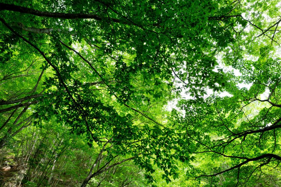森林の木漏れ日の写真素材