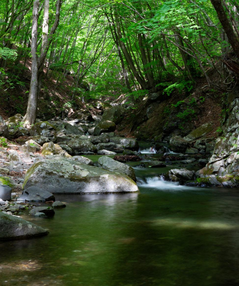 森の中の清流の写真素材