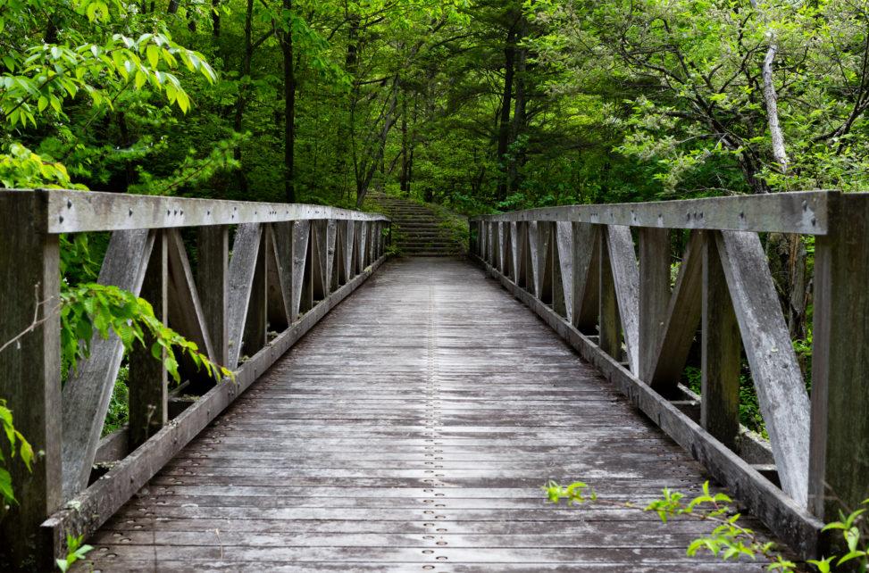 森林の中にある木の橋の写真素材