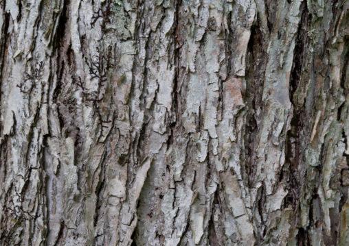 松の木肌のテクスチャー02の写真素材