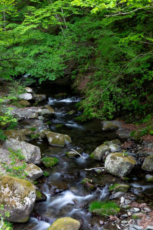 森の中の清流02の写真素材