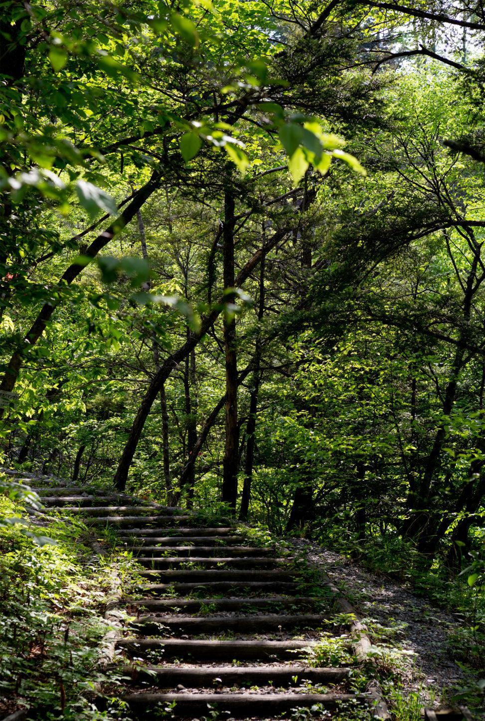 森林と階段の写真素材