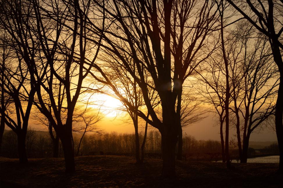 木と夕日(夕焼け)の写真素材