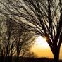 木と夕日(夕焼け)の写真素材02