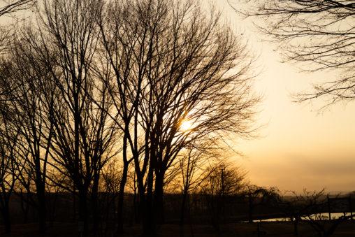 木と夕日(夕焼け)03の写真素材