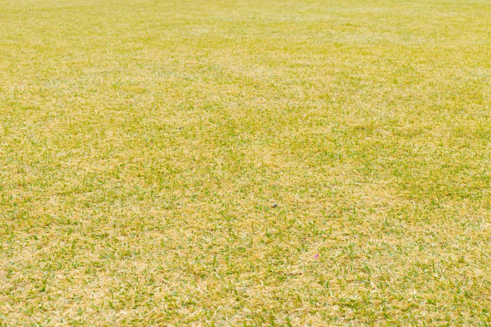 鮮やかな芝生の写真素材