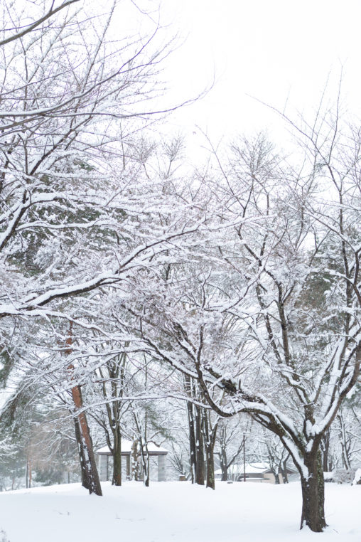 冬の風景・木に積もった雪の写真素材