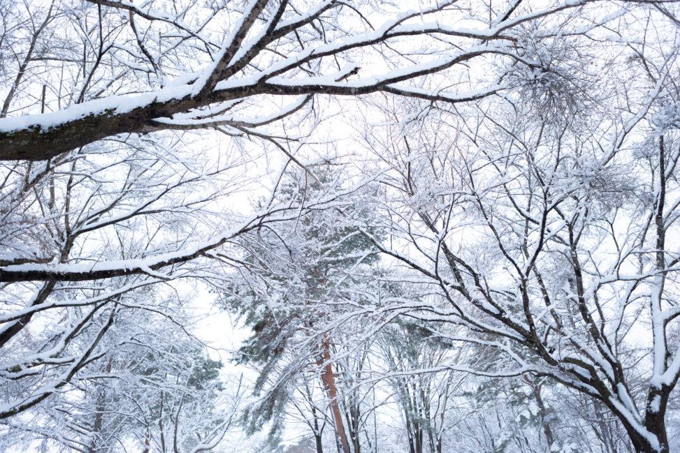 冬の風景・木に積もった雪02の写真素材