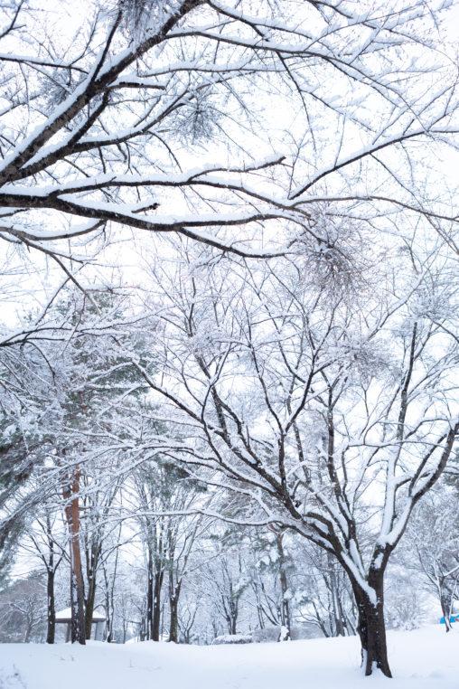 冬の風景・木に積もった雪03の写真素材