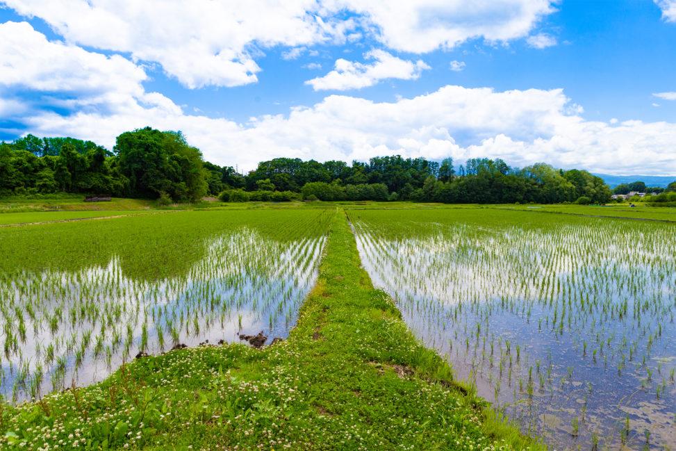 畦道(あぜみち)と田んぼの風景の写真素材