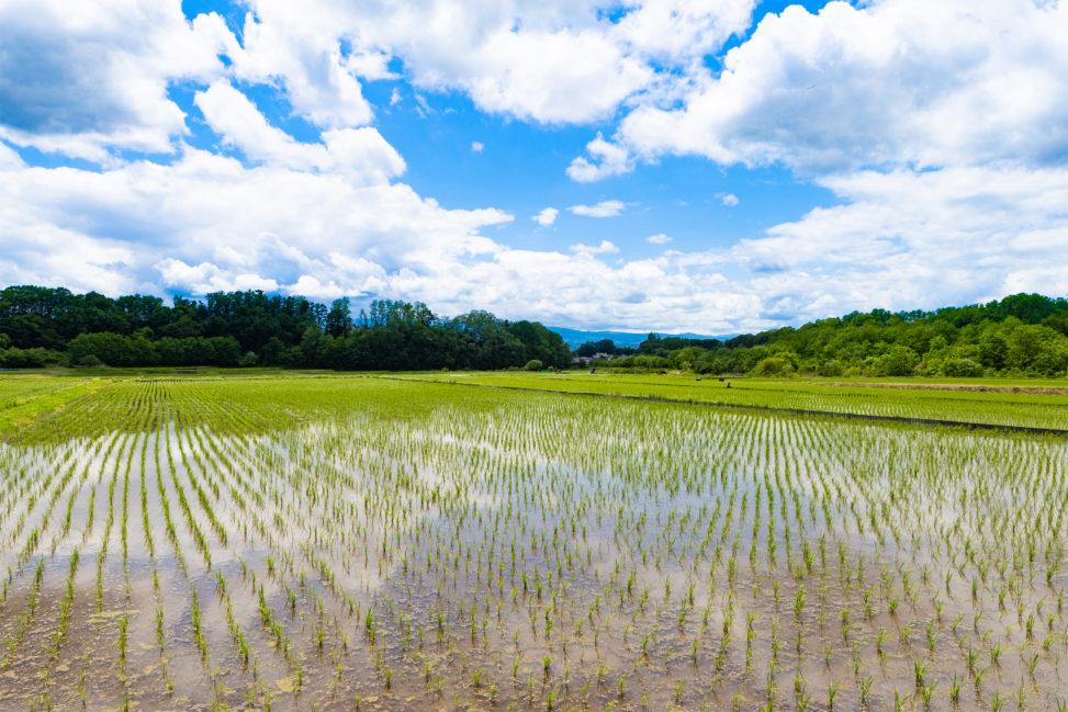 初夏の田んぼと青空03の写真素材