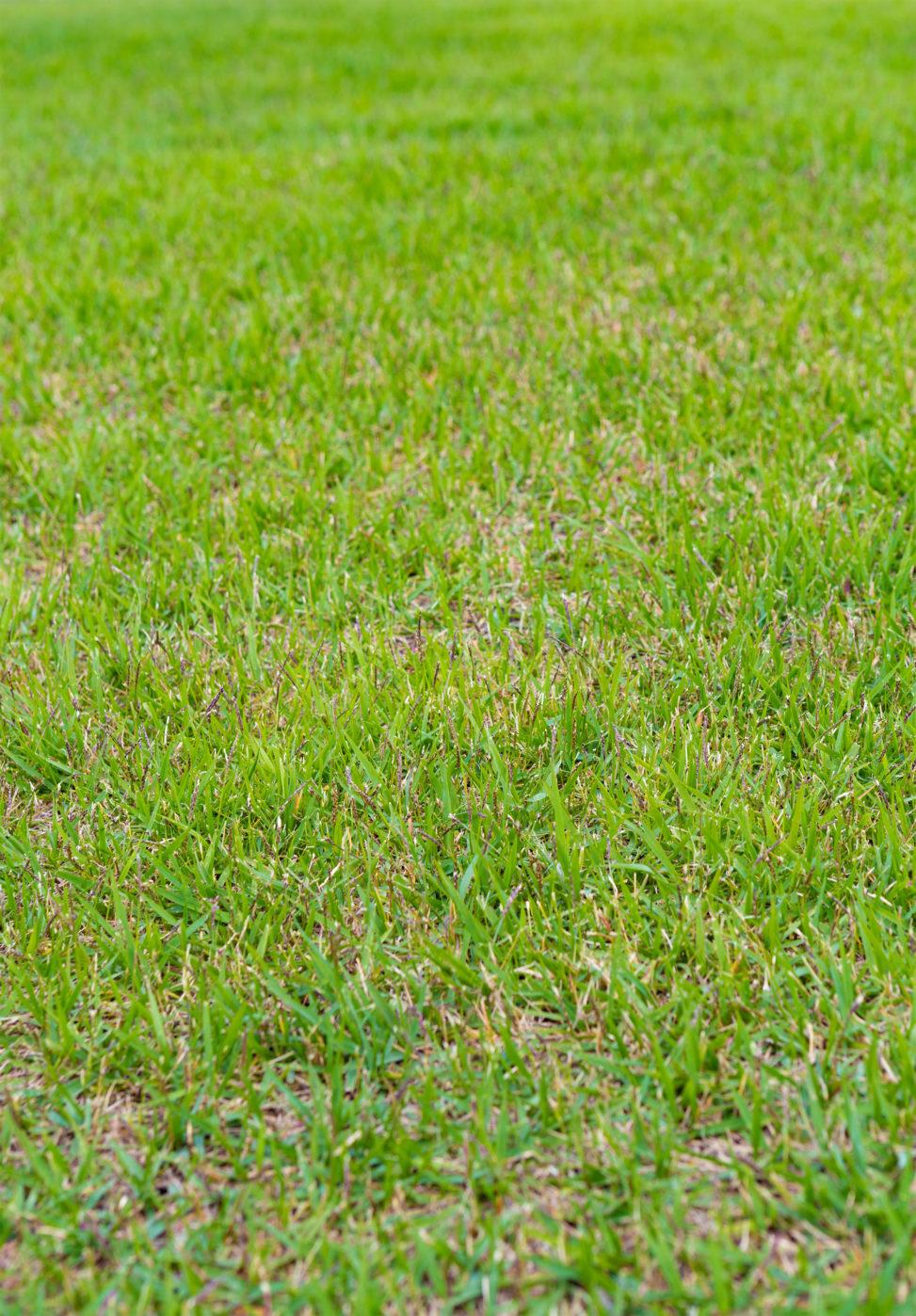 芝生の写真素材