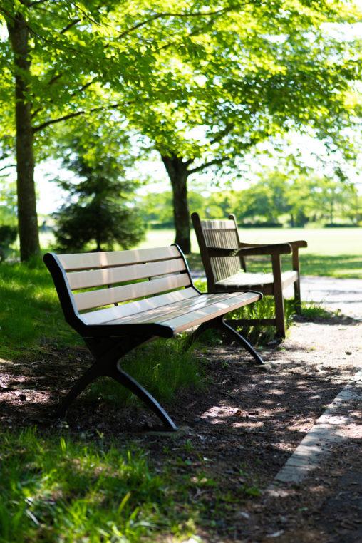 公園のベンチと木漏れ日